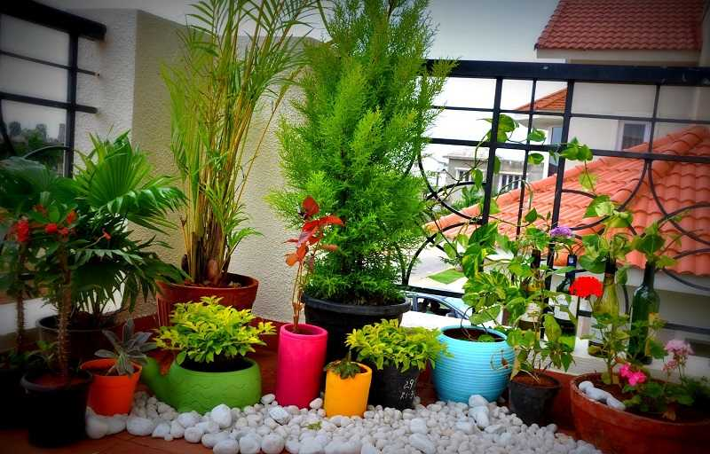 Set Up A Balcony Garden In Your Apartment